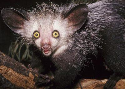 Animales más raros del mundo