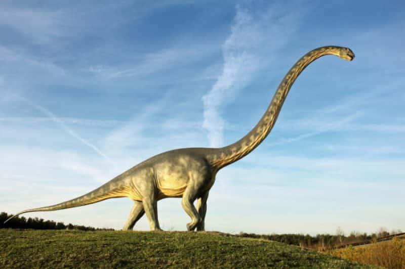 Diplodocus grande tamaño