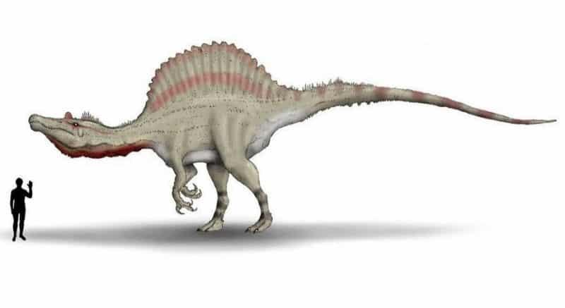 Spinosaurus depredador mas grande tamaño