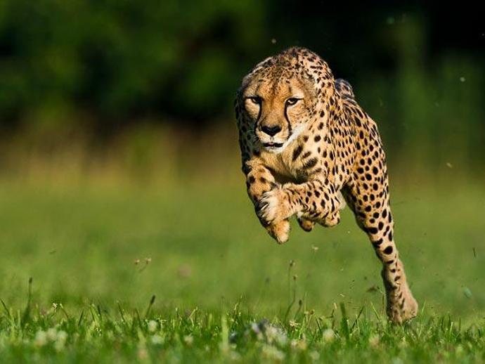 Animales más rápidos