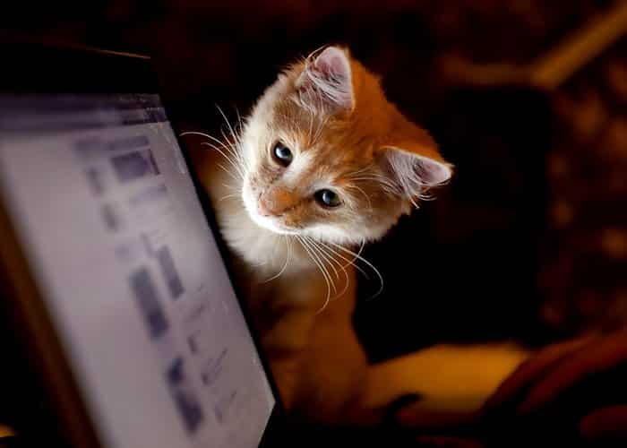 Gato mirando a un ordenador curiosidades