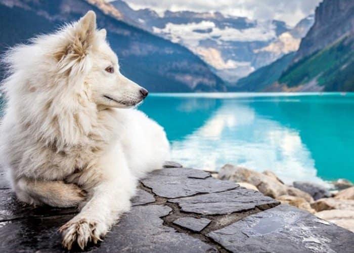 Razas de perros más caras